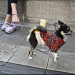 Dogs in Osaka