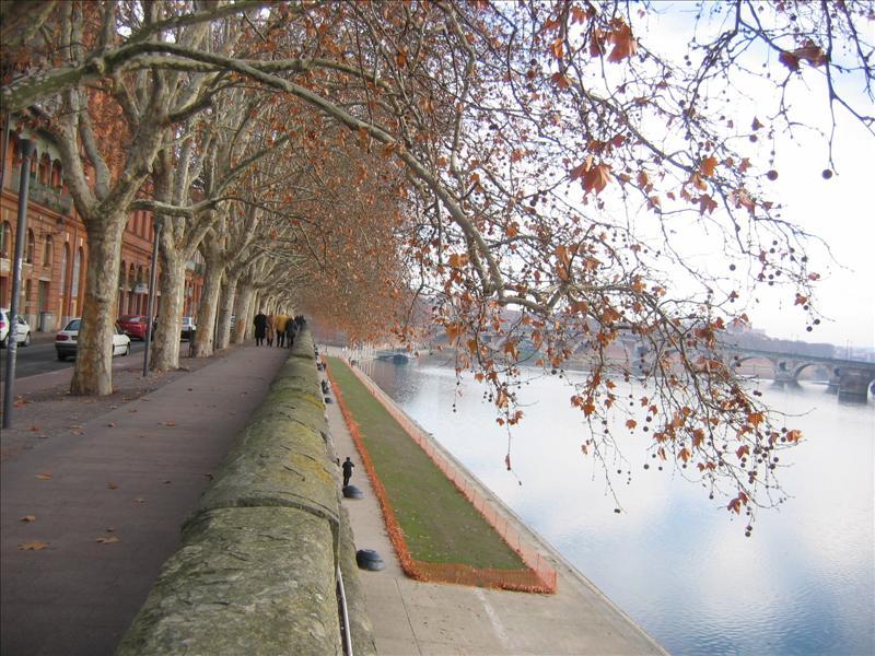 加隆河与梧桐树