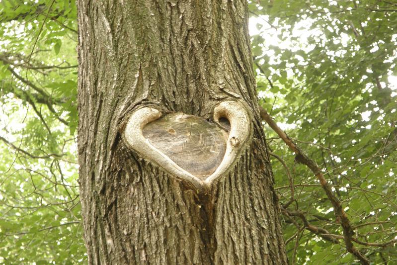 Tree's heart
