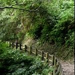 棲蘭森林步道 (21).JPG