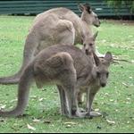 Jervis Bay, Australia - Mar 2009