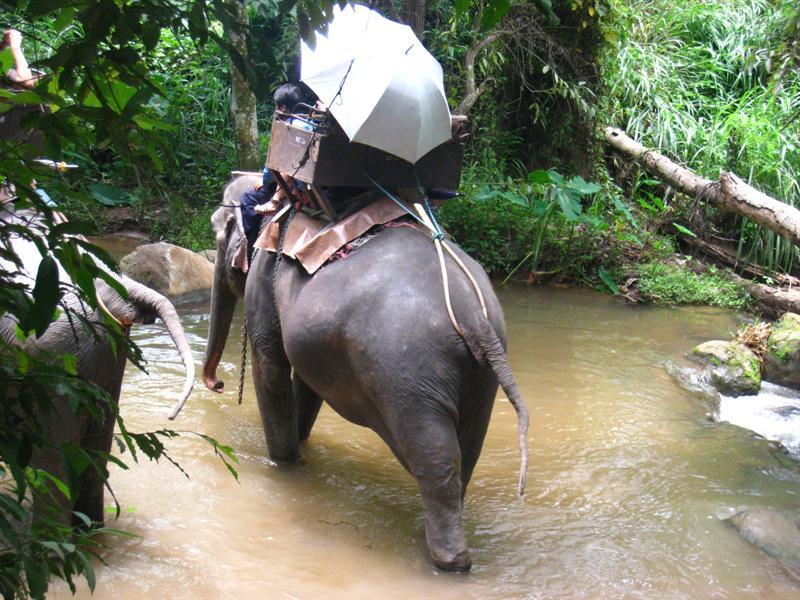 我在這裡看到大象大便了~~