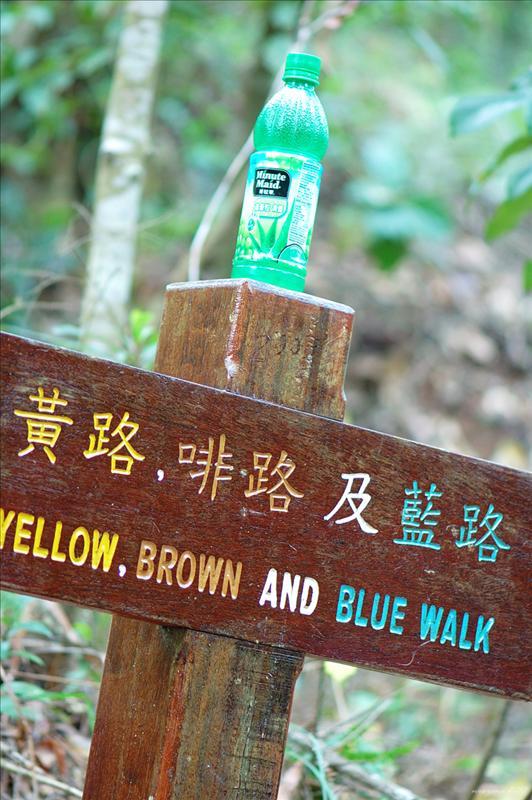 黃徑、啡徑及藍徑