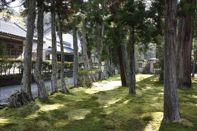 古木配青苔  日式庭園就是這樣做的
