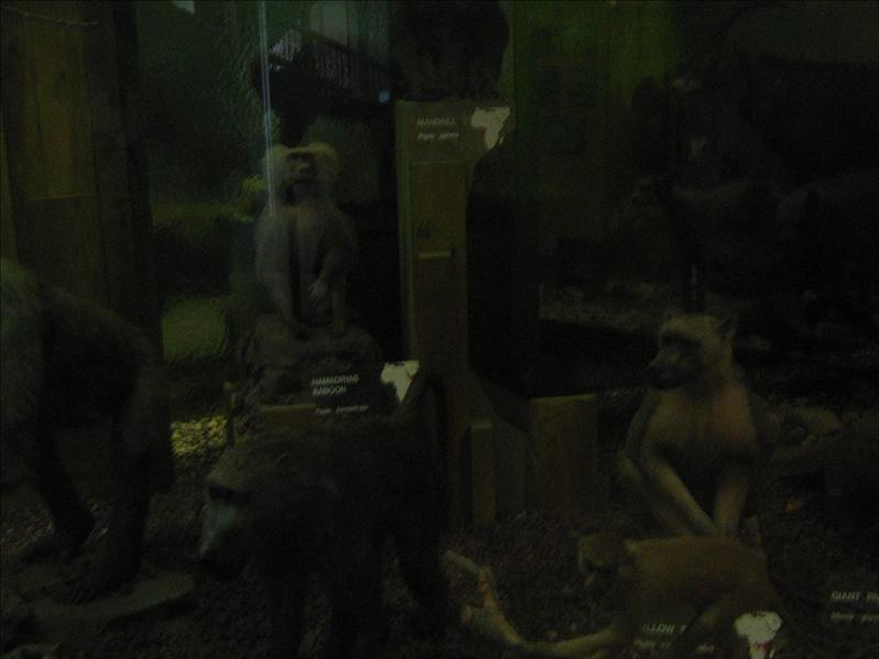 Stuffed Animals in Museum