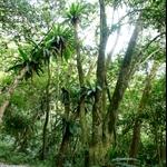 棲蘭森林步道 (22).JPG