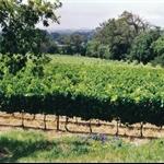 Winery Groot Constantia