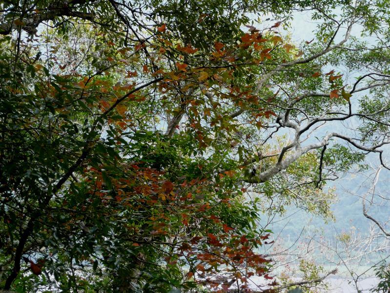 棲蘭森林步道 (2).JPG