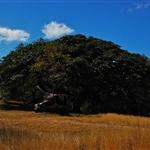 Parc National Santa Rosa