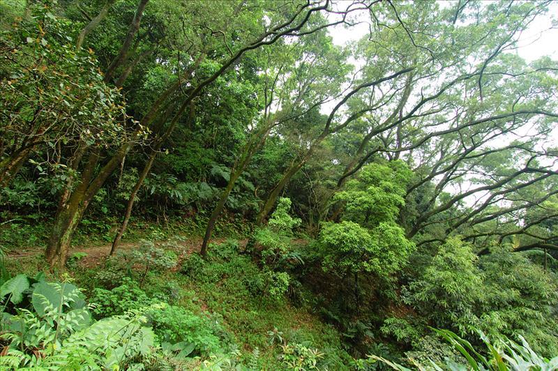 沿途欣賞樹木百態