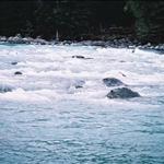 27喀納斯河1 (7).jpg
