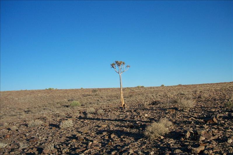 Lonely tree / unique arbre