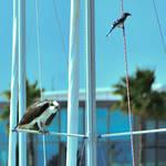 St Petersburg FL Races and Harbor 4-19-21-12 188.jpg