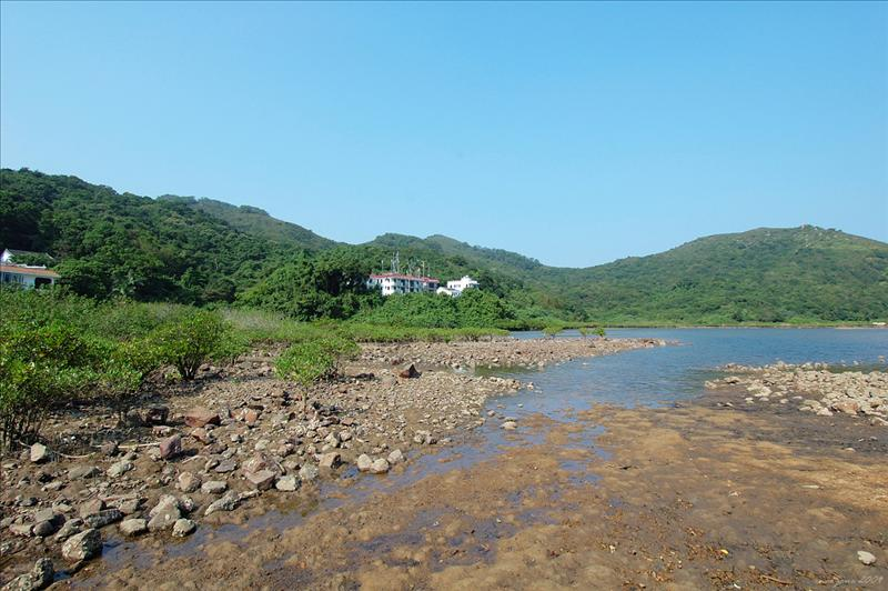 大灘村旁的泥灘 coastal mangals