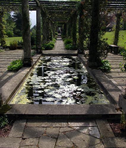 Pergola Pond