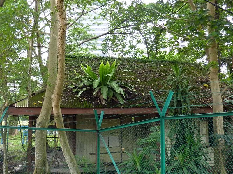 krumelis ant stogelio