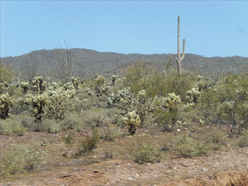 The contrasting green of the fuzzy cactuses is much more strking in person