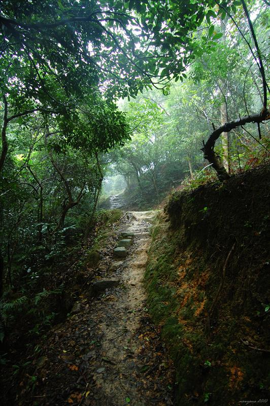 石坑古道 Shek Hang Ancient Trail