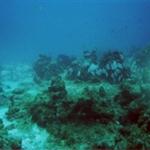 under water 1