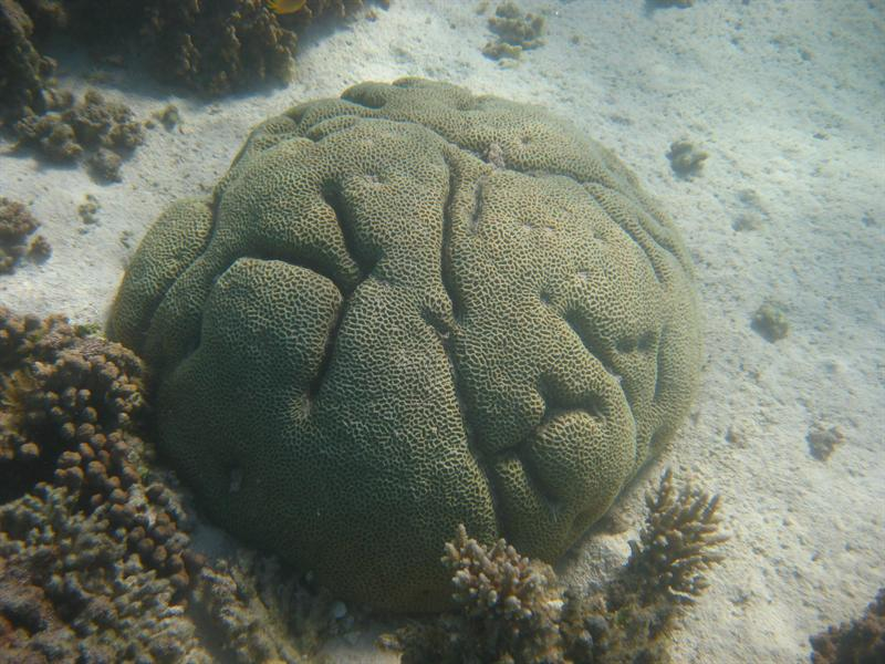 Reef at Turquoise Bay