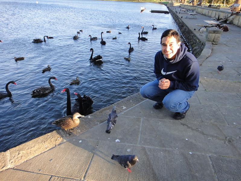 Feeding the black swans