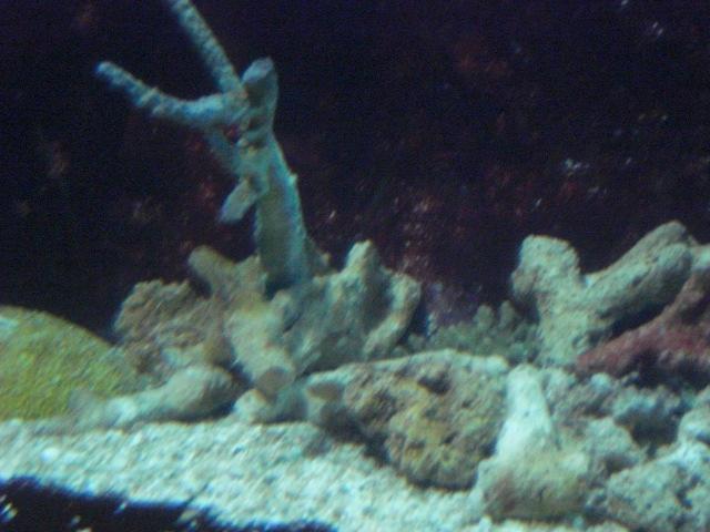 Caesar's aquarium