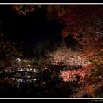 28 Nov '09 - Kyoto, Arashiyama