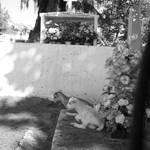 Cabri devant les tombes.jpg