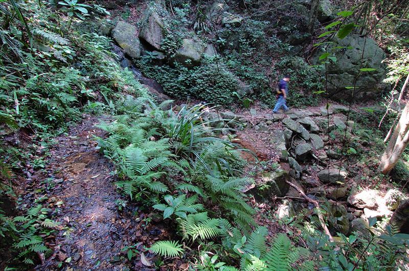 筆架山橫山林徑 Beacon Hill Forest Trail