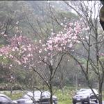 20090219登山社第28次登山-紗帽山橫嶺古道