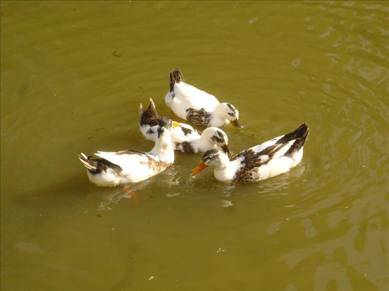Seems ducks are in some meeting