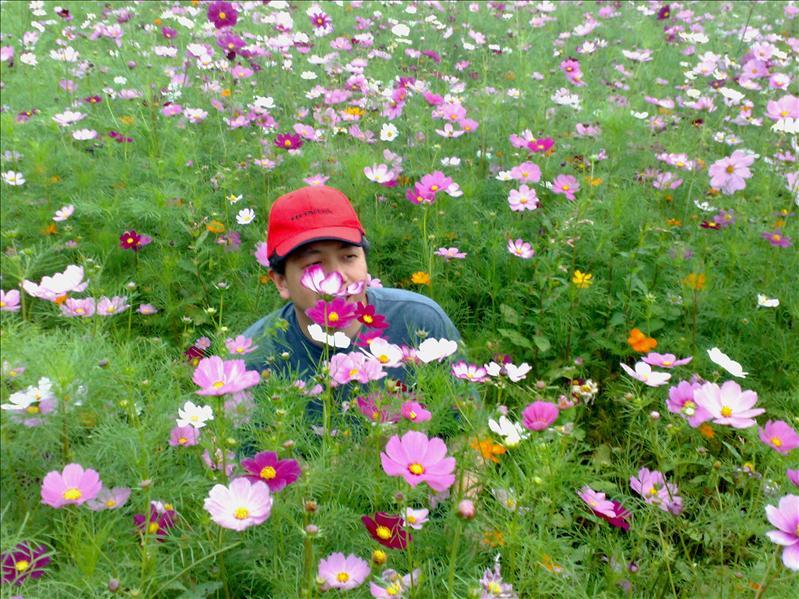 其實是想偷採路邊的野花