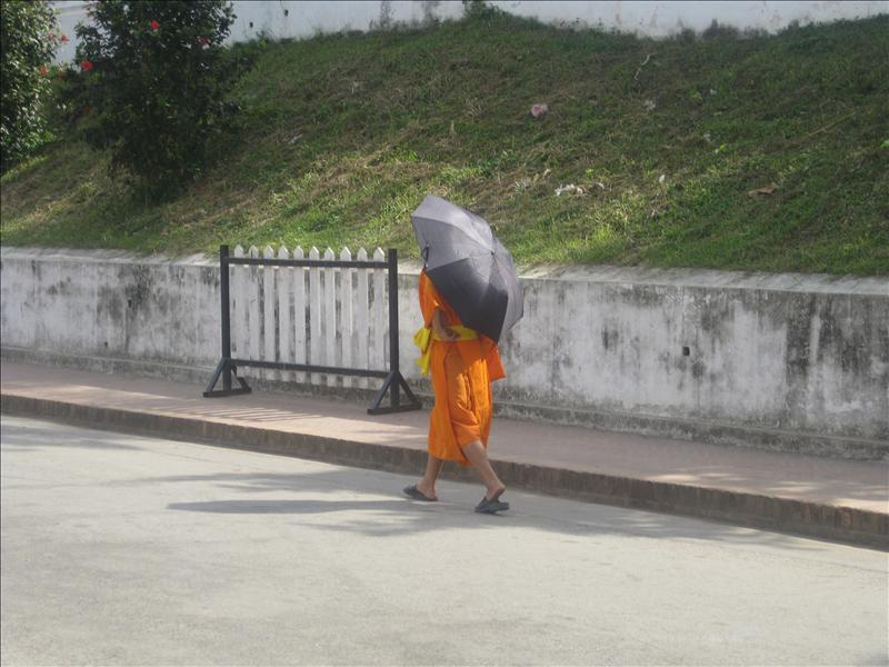 Novice monk walking with umbrella