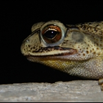 frog 023.jpg