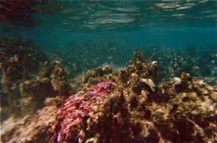 THE VISIBILITY IS GREAT IN THIS UNDERWATER SHOT,MORREA