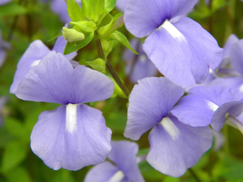 墾丁國家森林公園鮮花