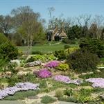 Alexandria garden