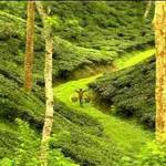 Sylhet : A Beautiful City To Visit In Bangladesh