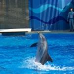 海洋公园海洋剧场海豚表演4.jpg