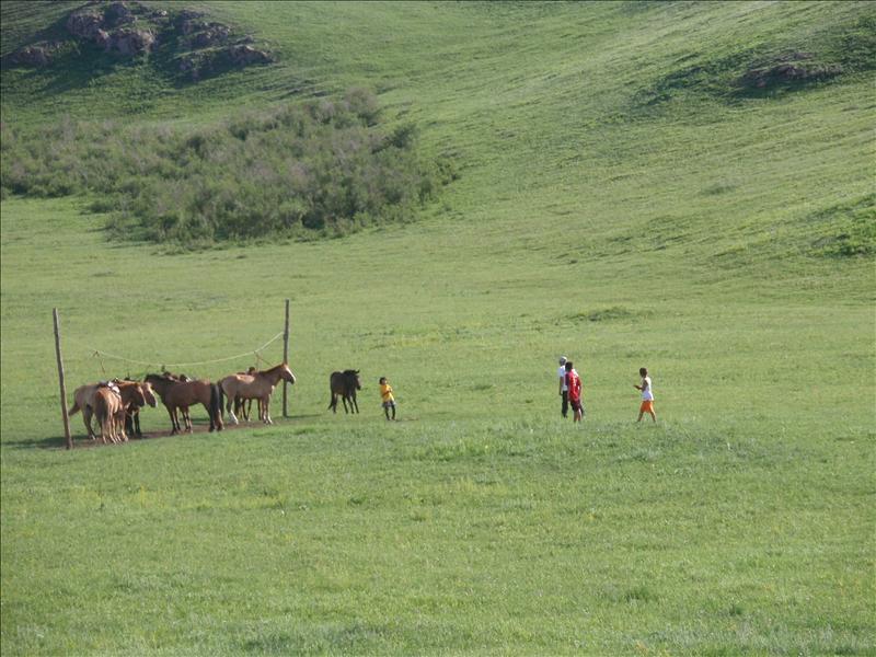 Mendee's horses