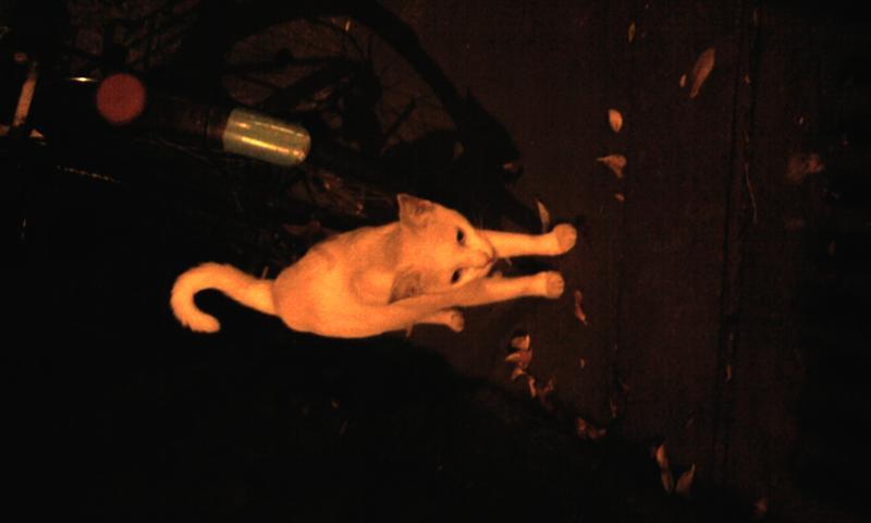 在我家外面  看到的小白貓^^~