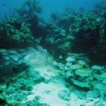 under water 5