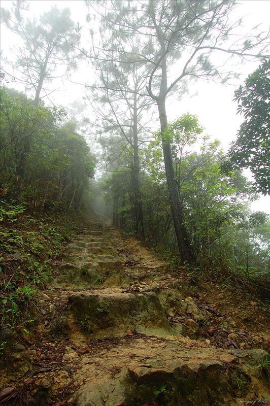 抵石坑坳接左上麥理浩徑第三段登雞公山