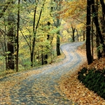 Autumn_Road,_Percy_Warner_Park,_Nashville,_Tennessee.jpg