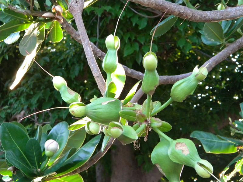 關山蓮莊植物