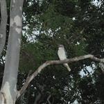 Townsville 023.JPG