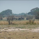 First Elephant Sighting at the Seep between Kasane and Kazungula..