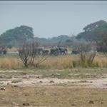 First Elephant Sighting at the Seep between Kasane and Kazungula..