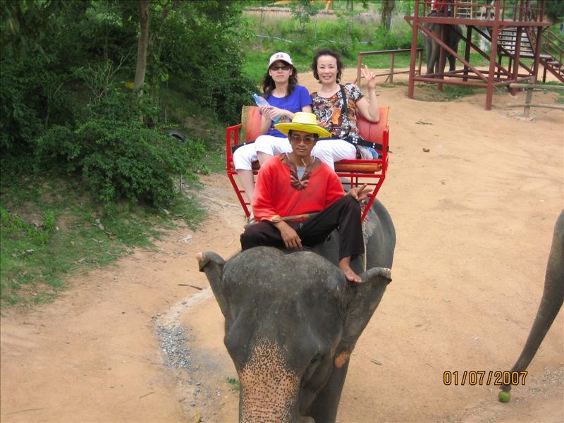 大象很可怜的