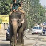 Verkehr in Sauraha.JPG